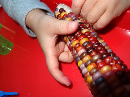 Thanksgiving-themed learning - corn shucking >> Gift of Curiosity