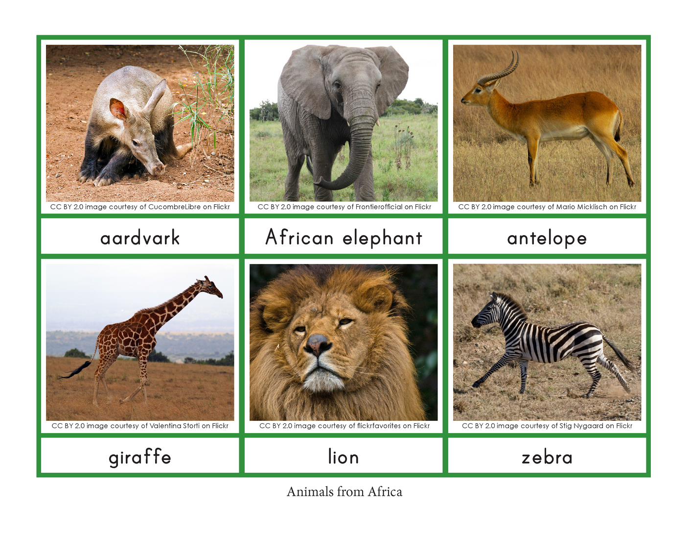 Montessori Animals and their Continents
